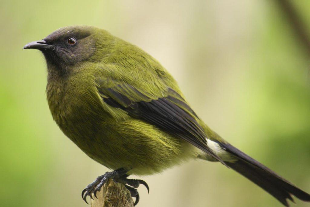bird44